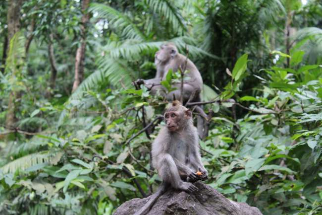 Tag 5: Monkey Forest Ubud