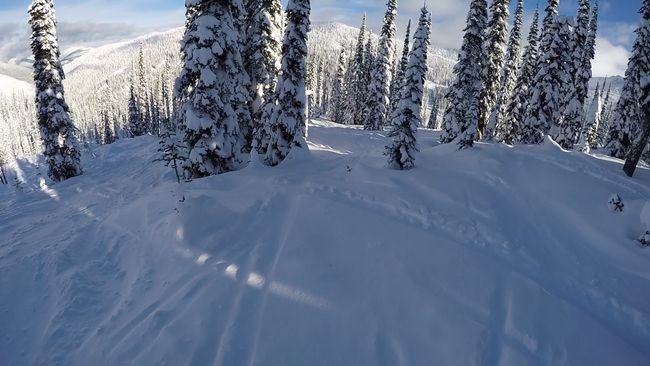 Powder and trees