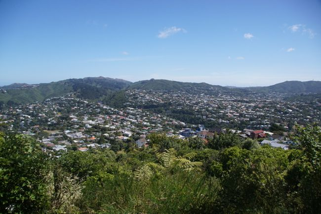Lookout auf Wellington