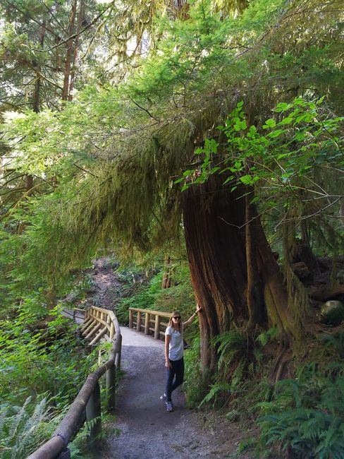 Kleiner Wanderweg am Salmon Hatchery, Capilano River Regional Park