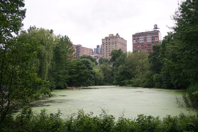 Central Park mit Manhatten im Hintergrund