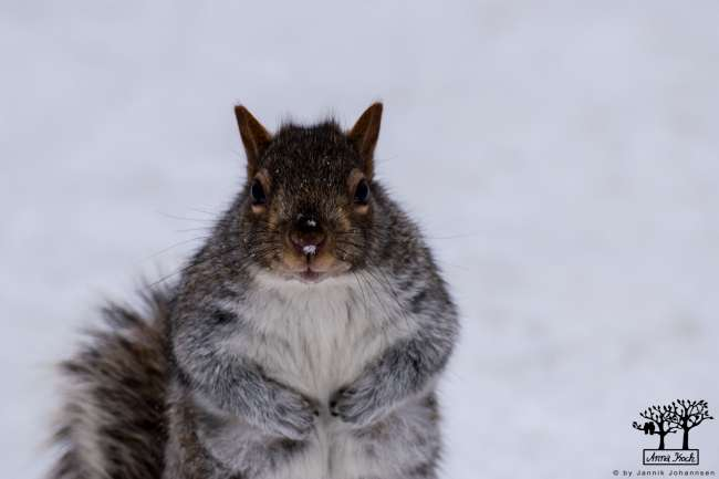 you have nuts?