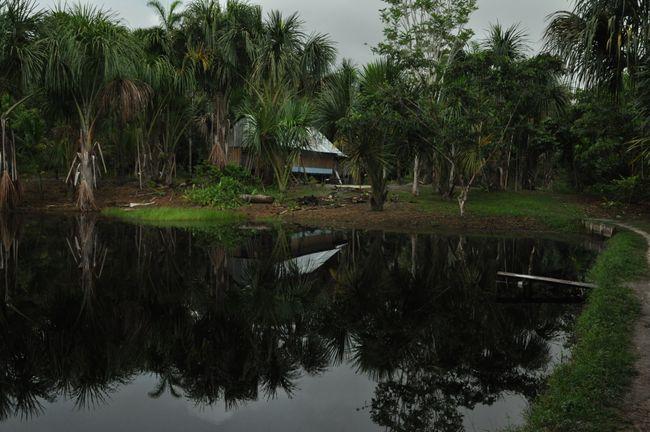 Fischzucht im Regenwald