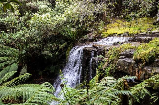 07.11.2016 - Tasmanien, Mt. Wellington