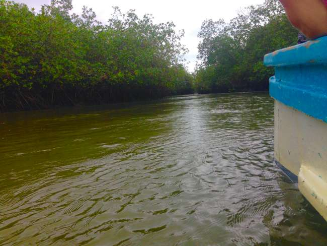Boat ride through the mangroves