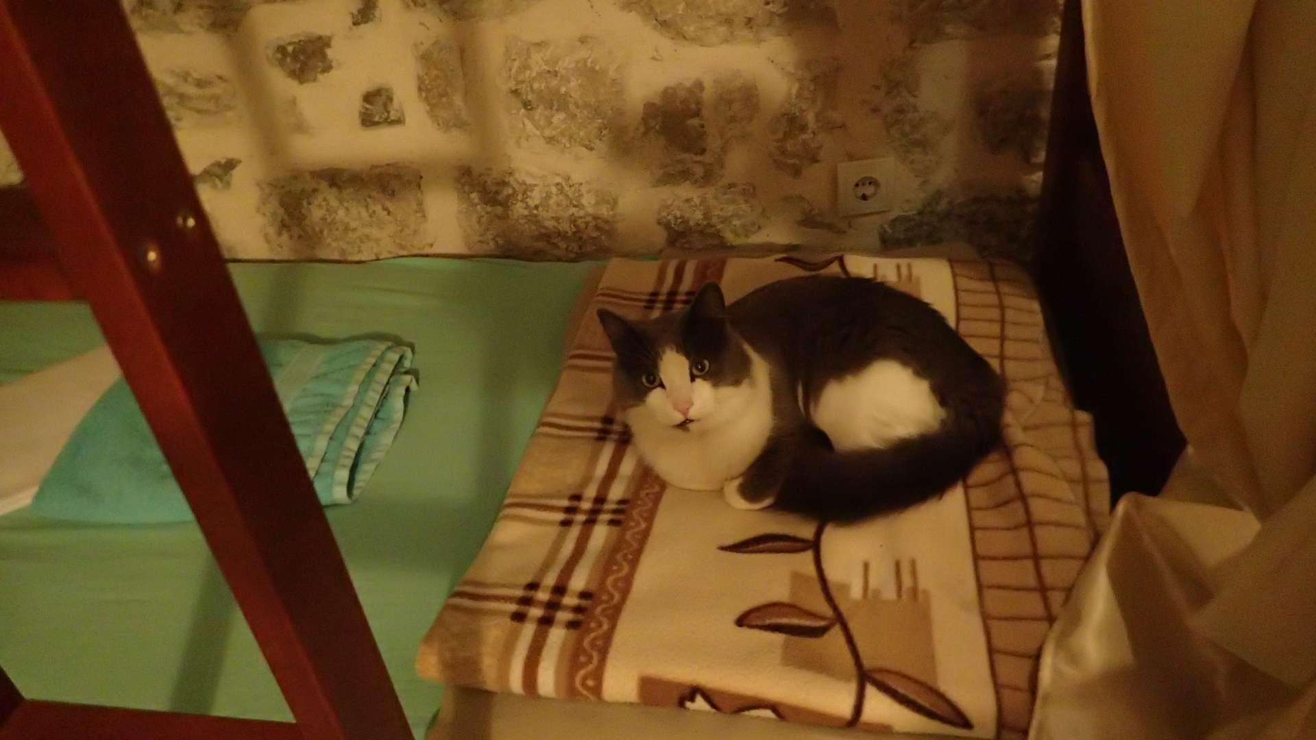 die invasion der katzen und ein weiter aufstieg in kotor – vakantio, Badezimmer ideen