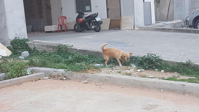 Hund mit Maulkorb.