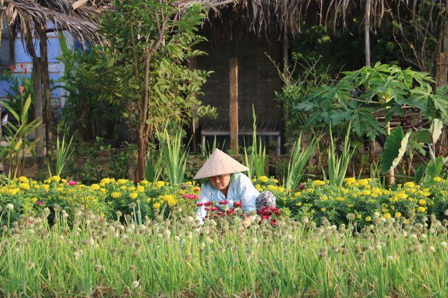 Gärten bei Hoi An