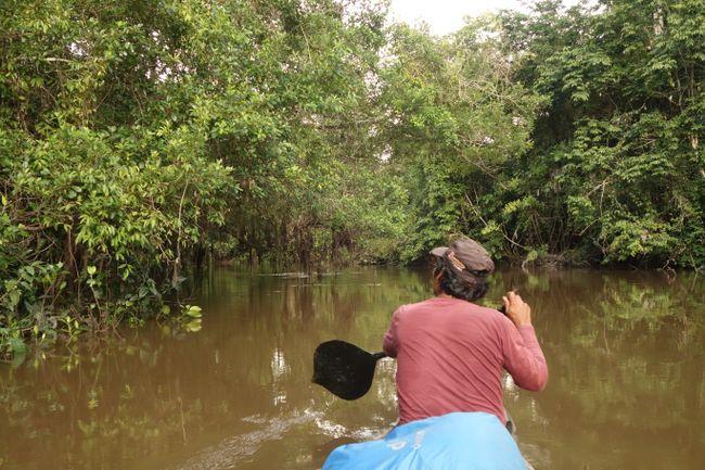 Und dann gings los mit dem Kanu. Die nächsten vier Tage sah es dann im Prinzip so aus. José hat uns zusammen mit Emilia durch die Gegend geschippert und nach Tieren Ausschau gehalten.